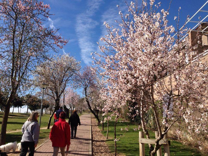 La primavera se adelanta en Valladolid