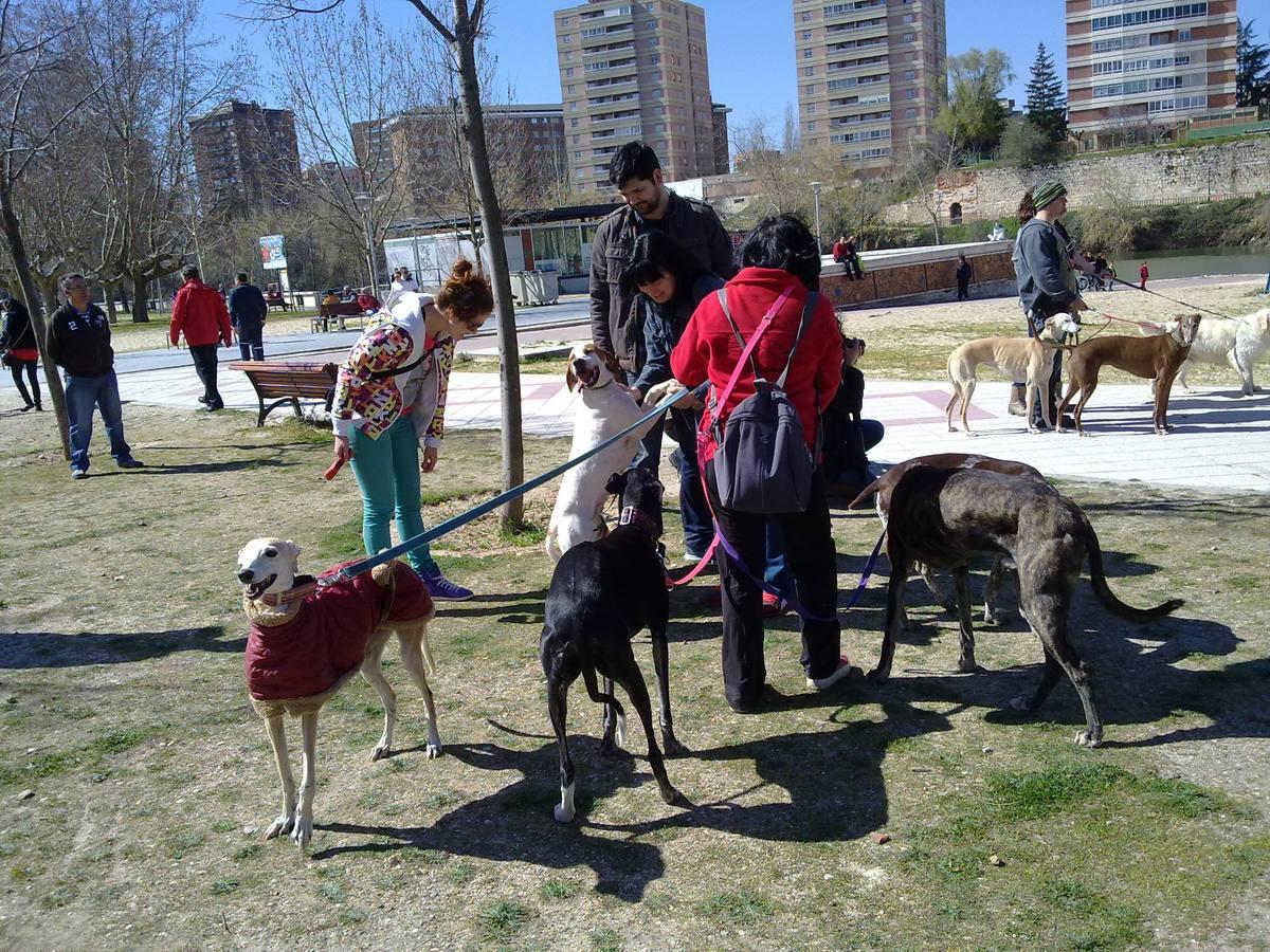 Concentración de perros en Las Moreras